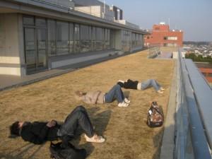地上7階の芝生広場